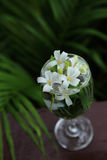 Pequeñas flores blancas, Jessamine anaranjado, en el florero de cristal Fotografía de archivo