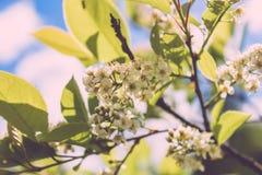 Pequeñas flores blancas macras Fotos de archivo libres de regalías