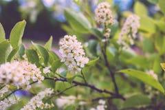 Pequeñas flores blancas maravillosas Imagen de archivo
