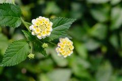 Pequeñas flores brillantes Imagen de archivo libre de regalías