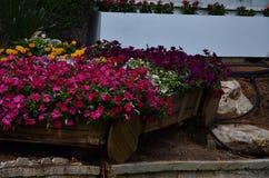 Pequeñas flores carmesís en el jardín - Ashkelon, Israel - abril de 2016 - jardines abiertos del ` de Gan Zvi del ` Fotos de archivo
