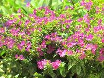 Pequeñas flores con la luz del sol en el jardín Imágenes de archivo libres de regalías