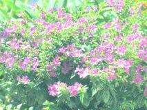 Pequeñas flores con la luz del sol en el jardín, estilo del vintage Imagen de archivo