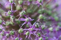 Pequeñas flores de la lila como fondo imagen de archivo
