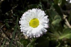 Pequeñas flores de la primavera de Clorful en la sol Foto de archivo