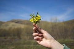 Pequeñas flores del amarillo de la primavera del ramo a disposición Fotografía de archivo