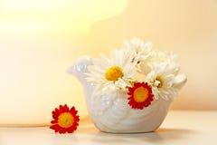 Pequeñas flores del crisantemo fotos de archivo