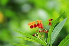 Pequeñas flores en el jardín en Tailandia Fotografía de archivo