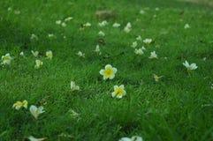 Pequeñas flores en fondo de la hierba imagen de archivo