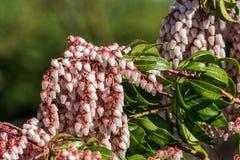 Pequeñas flores en un arbusto en bosque con el fondo del blure Fotos de archivo