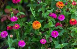 Pequeñas flores en un césped Fotos de archivo libres de regalías