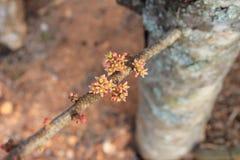 Pequeñas flores en un tronco Fotografía de archivo
