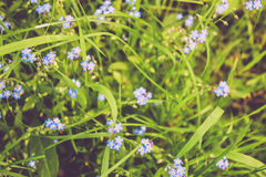 Pequeñas flores lindas Foto de archivo libre de regalías