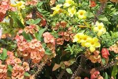 Pequeñas flores multicoloras Imagen de archivo libre de regalías