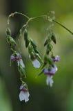 Pequeñas flores púrpuras Imagen de archivo