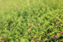 Pequeñas flores púrpuras en el jardín imagen de archivo libre de regalías