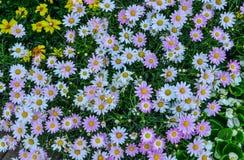Pequeñas flores para las decoraciones en parque imagen de archivo libre de regalías