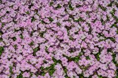 Pequeñas flores para las decoraciones en parque imagenes de archivo