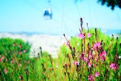 Pequeñas flores rosadas en un jardín Foto de archivo libre de regalías
