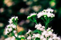 Pequeñas flores salvajes Foto de archivo