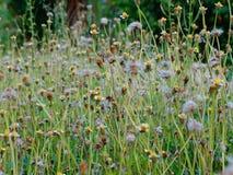 Pequeñas flores salvajes en jardín Imagenes de archivo