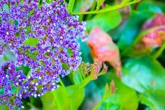 Pequeñas flores violetas Fotografía de archivo