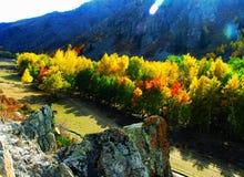 Pequeñas granjas, el valle, abedul, paisaje del donggou de Altai fotografía de archivo