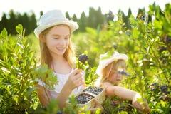 Pequeñas hermanas lindas que escogen bayas frescas en granja orgánica del arándano en día de verano caliente y soleado Alimento b imagen de archivo