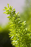 Pequeñas hojas Fotografía de archivo libre de regalías
