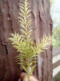Pequeñas hojas hermosas Fotos de archivo