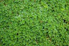 Pequeñas hojas verdes Fotos de archivo libres de regalías