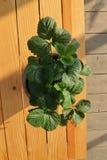 Pequeñas macetas en balcón de los estantes con el mágico de la luz del sol en la parte 1 de la mañana imagen de archivo