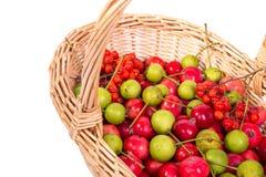 pequeñas manzanas rojas frescas, serbal rojo y peras verdes Imagen de archivo
