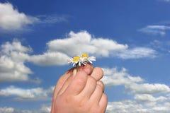 Pequeñas margaritas en pequeñas manos Imagen de archivo