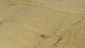 Pequeñas ondas en la línea de la playa almacen de metraje de vídeo