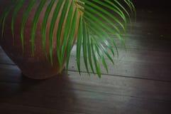 Pequeñas palmeras, consistiendo en los potes de arcilla usados para la decoración interior imágenes de archivo libres de regalías