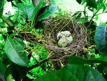 Pequeñas palomas Imagenes de archivo