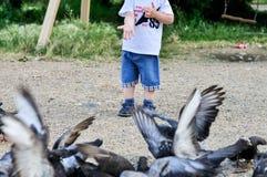 Pequeñas palomas del feedind de la mano afuera Foto de archivo