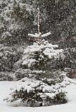 Pequeñas piceas en caída de la nieve foto de archivo libre de regalías