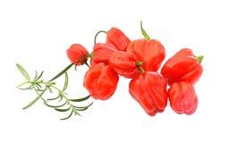 Pequeñas pimientas de chile Imagen de archivo libre de regalías