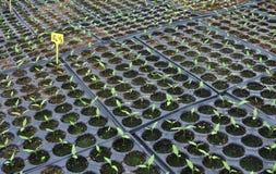 Pequeñas plantas Fotografía de archivo