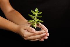 Pequeñas plantas Fotos de archivo libres de regalías