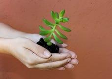 Pequeñas plantas Imagen de archivo libre de regalías