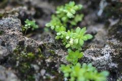Pequeñas plantas Fotos de archivo