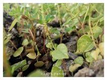 Pequeñas plantas Foto de archivo