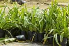 Pequeñas plantas alineadas Fotos de archivo libres de regalías