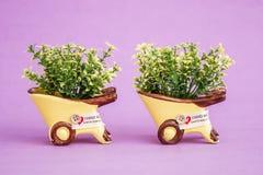 Pequeñas plantas artificiales decorativas en potes amarillos Fotos de archivo libres de regalías