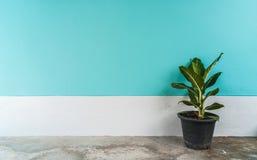 Pequeñas plantas con la pared en colores pastel del cemento Imagen de archivo libre de regalías