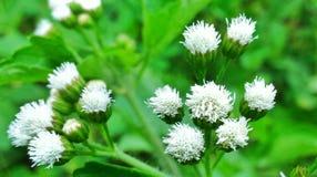 Pequeñas plantas de la flor Fotografía de archivo libre de regalías