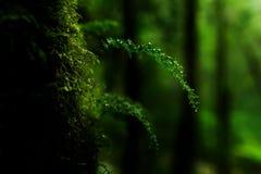 Pequeñas plantas en Kew Mae Pan Nature Trail Fotos de archivo libres de regalías